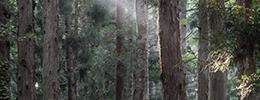 林業機械について